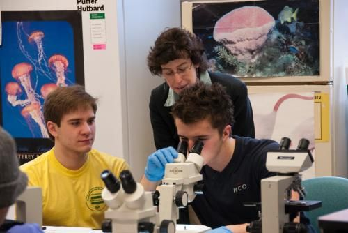 female professor jodi yorty helping two male students with microscopes pictures of sea life behind
