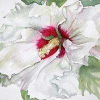 Work by Linda L. Eberly