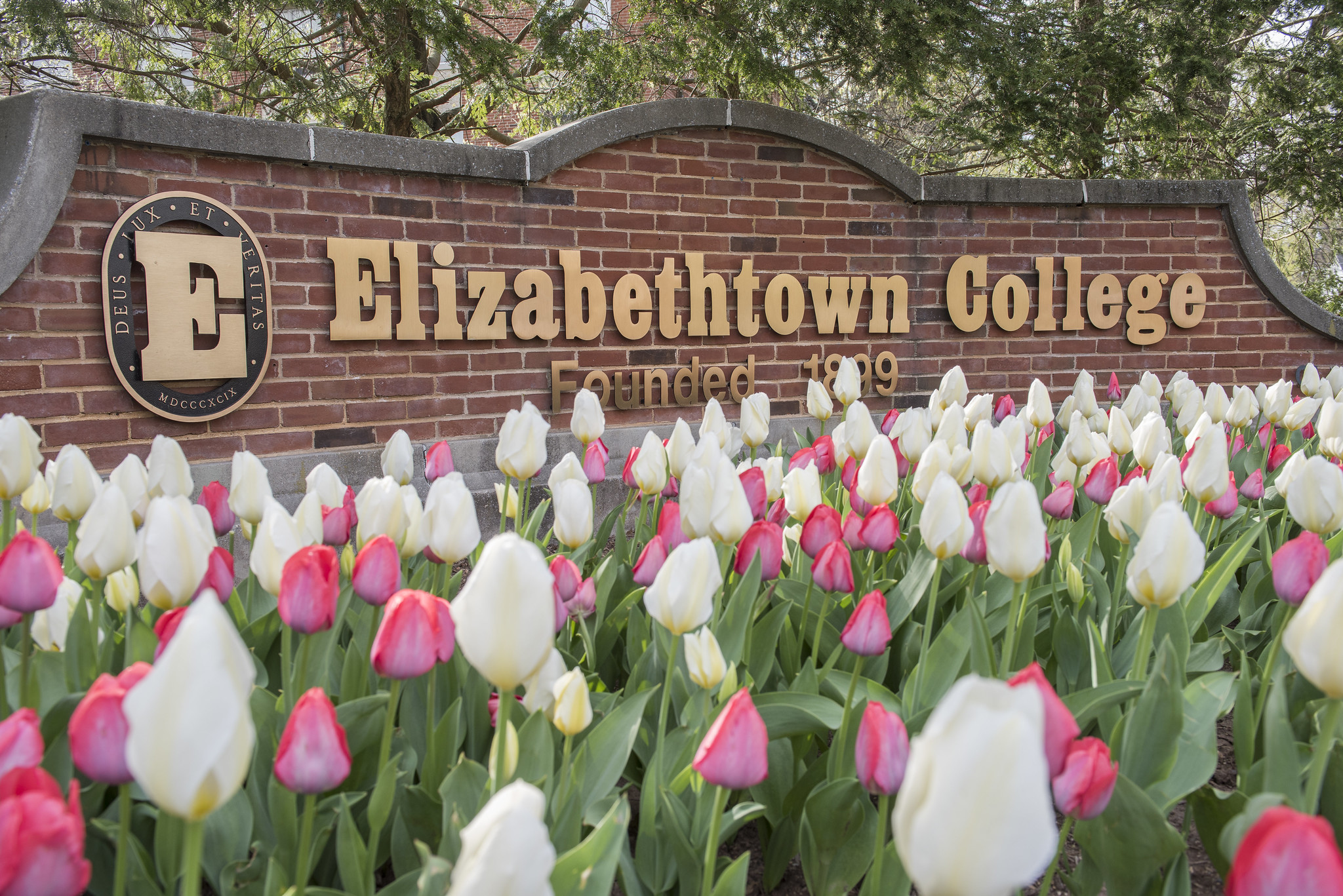 Spring flowers in front of the Etown sign